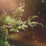 Estampa de Navidad | Abeto bajo la nieve | Foto Pezibear/Pixabay