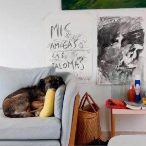 Del todo imposible | 9/09-1/11/2020 | Sala de Arte Joven | Comunidad de Madrid | Clara Moreno Cela | 'M.A.L.P. (Mis amigas las palomas) (2020)