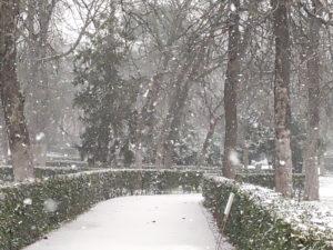 Suspensión del acceso a todos los parques, jardines y zonas verdes municipales por riesgo de caída de árboles | Parque del Retiro