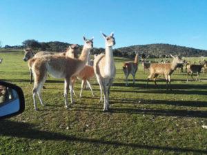 Los mejores planes con niños en Madrid | Safari Madrid | Aldea del Fresno